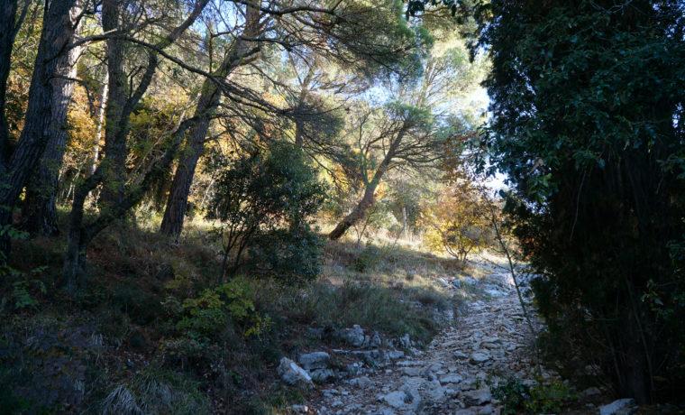 sentieri-francescani_c