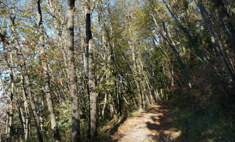 sentieri-francescani_d